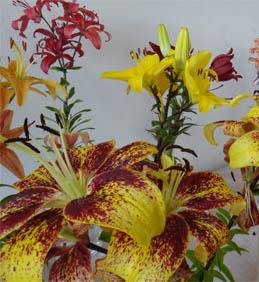 Výstava lilií vRajhradském klášteře