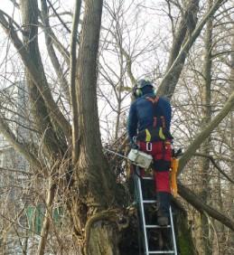 Zdravotní řezy stromů, ořezy vrb hlavatých ve vojkovické vrbovně