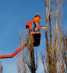 OZNÁMENÍ: Další pokračování pravidelné údržby stromů 20.03.2019