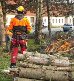OZNÁMENÍ: Pravidelná údržba stromů na území obce Vojkovice