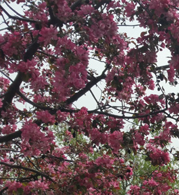Jaro ve Vojkovicích