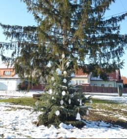 Zasazení nového vánočního stromu