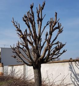 Údržba stromů vulici Blatná