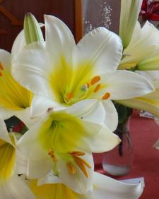 Informace z již proběhlé výstavy lilií
