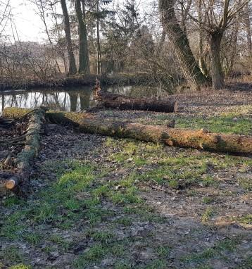 Vyprošťování stromů spadlých přes Vojkovický náhon