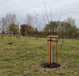 Dosadba stromů za mlýnem
