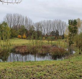 Podzimní  Jižní mokřad