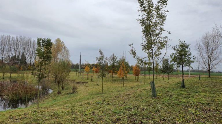 Podzimní jižní mokřad 2