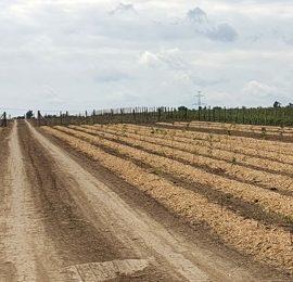 Realizace biokoridorů na území obce Vojkovice